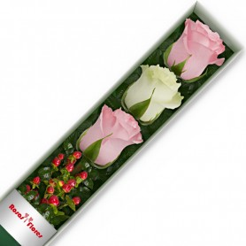 Caja de Rosas Color Mix Rosado Blanco 3 Rosas